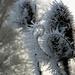 Art work by Jack Frost.... by snowy