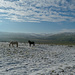 Winter horses by shirleybankfarm