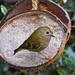 BIG FEAST FOR A LITTLE BIRD by markp