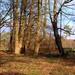 Blickling Woods