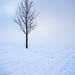 Simply Snowy Tree by jae_at_wits_end