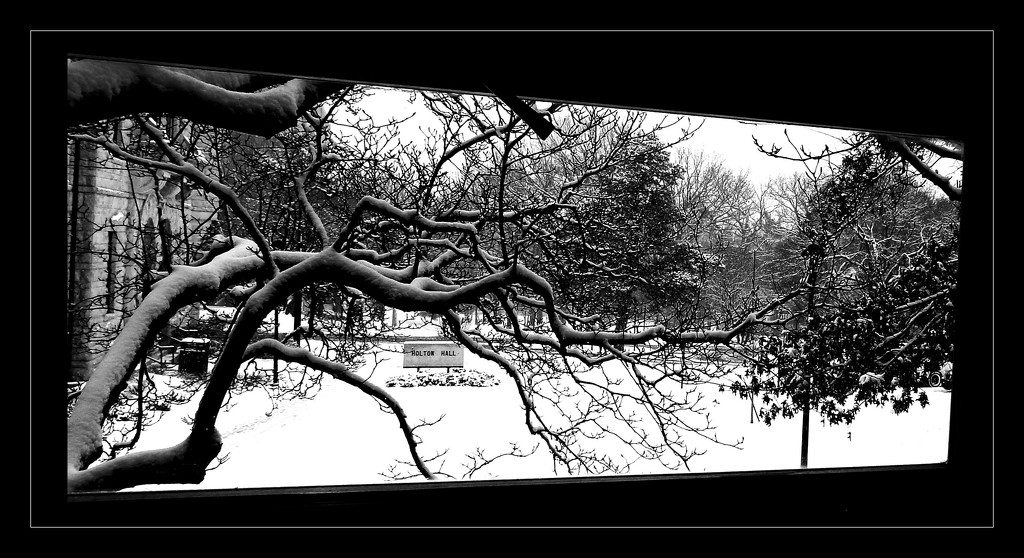 Snowy Branches on Campus by mcsiegle