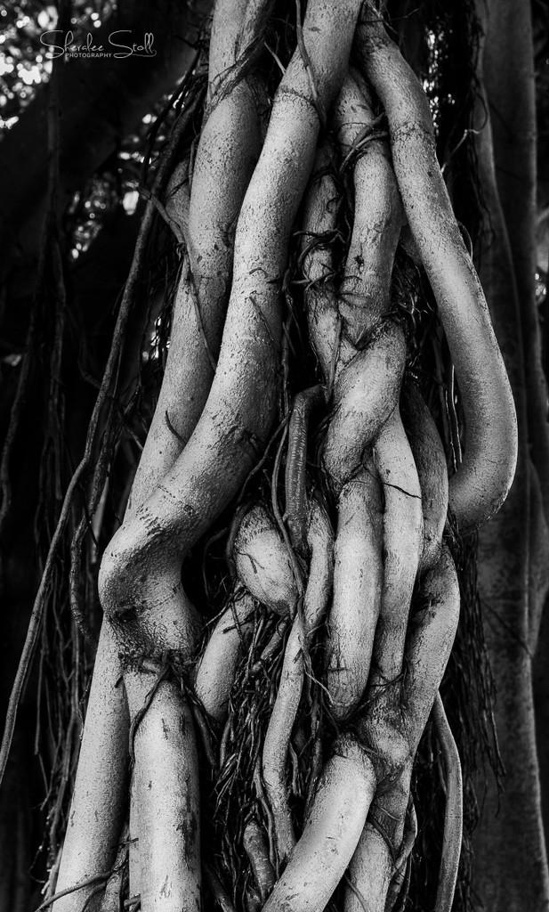 Sausage Tree? by bella_ss