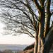 Evening sunshine... by susie1205