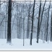 A Snowy Day by olivetreeann