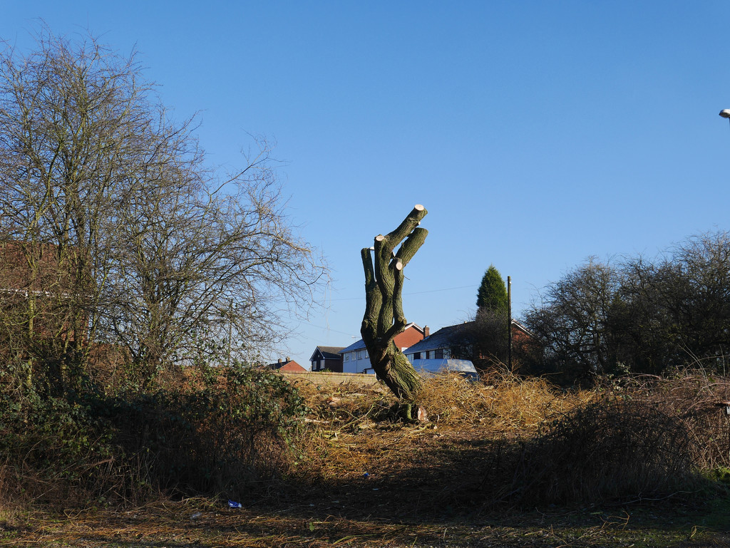 Willow Done...... by brickmaker