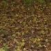 Chestnuts by pyrrhula
