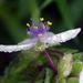 Macro flower in the rain by maureenpp