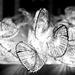 The Light of Love by gailmmeek
