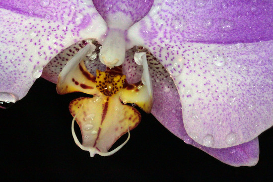 Orchid_83:365 by gaylewood