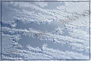 29th Jan 2016 - Vanilla Frost