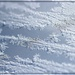 Vanilla Frost by olivetreeann