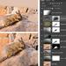 Viscacha in progress