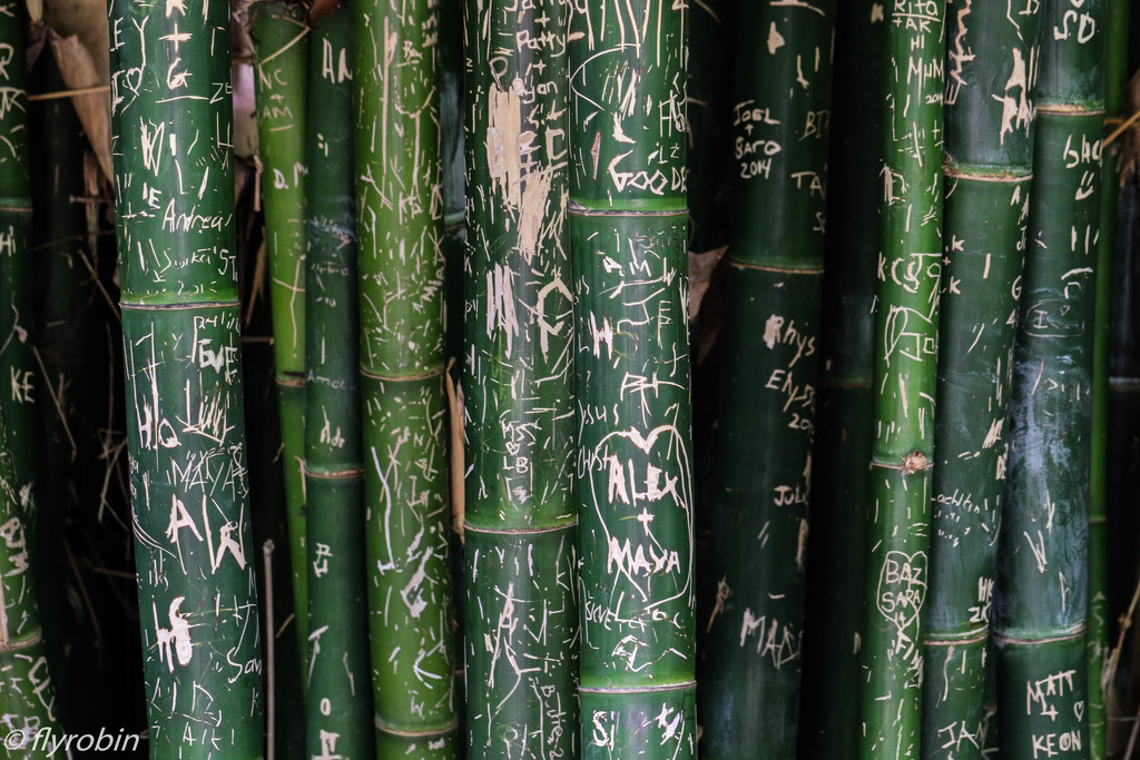 Bamboo stories by flyrobin