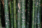 29th Jan 2016 - Bamboo stories