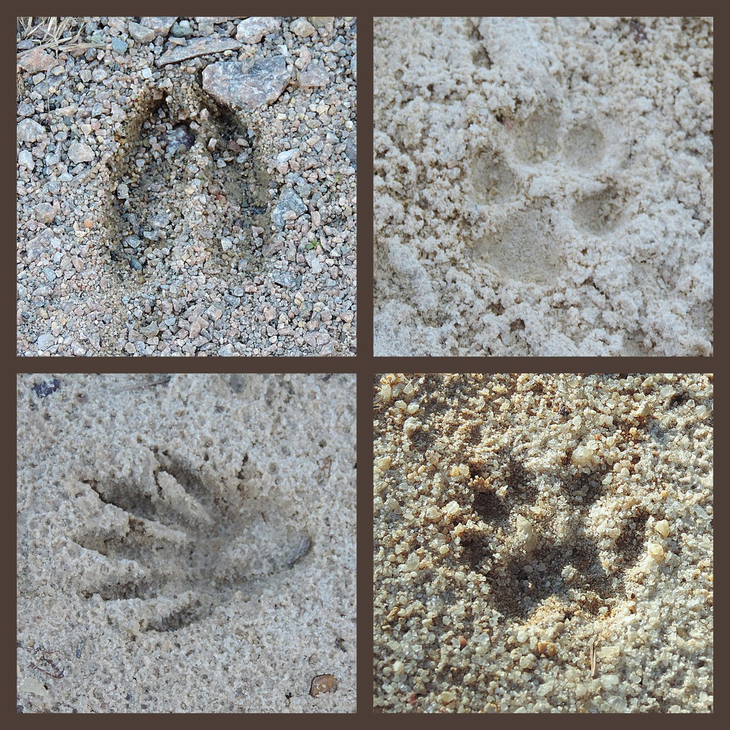 Footprints in the sand! by homeschoolmom