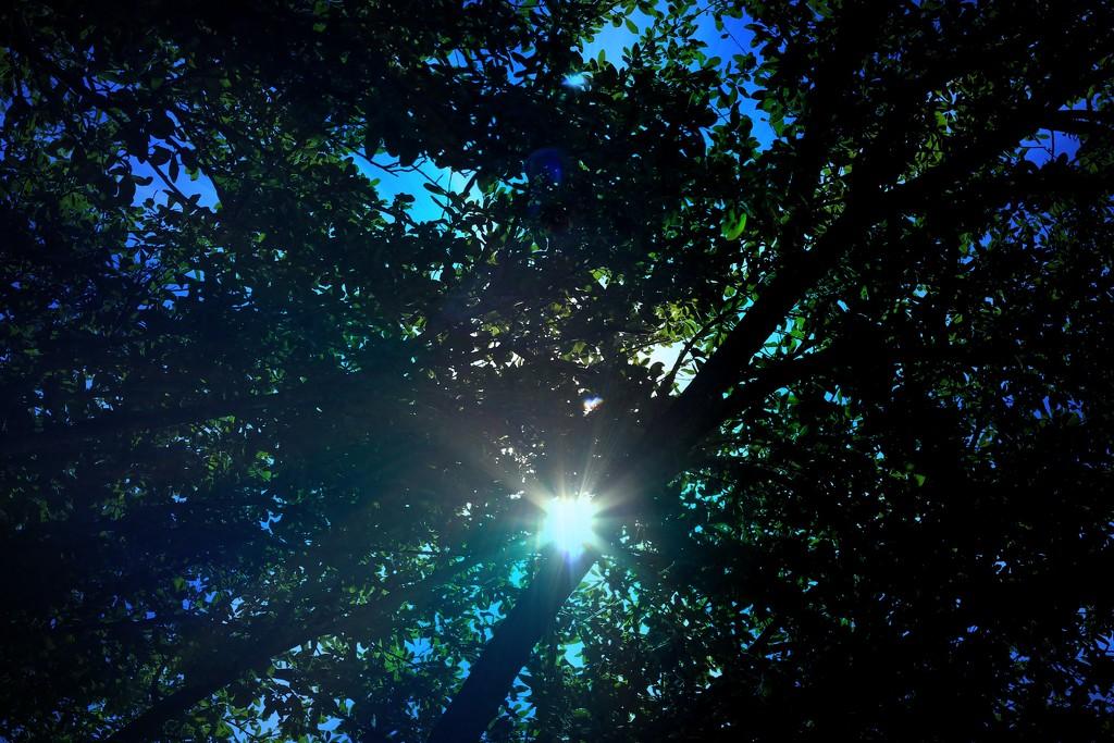 Sunlight by judyc57