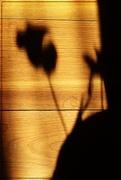 31st Jan 2016 - A Shadow on the Floor