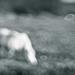 The Pony in the Bokeh Field