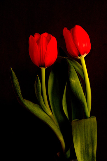 Seeing Red by jayberg