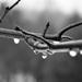 Rainy Day by tracys