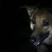 Ava in the dark
