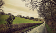 4th Feb 2016 - Day 35 - Country Lane