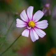 3rd Feb 2016 - 029 - Flower Study
