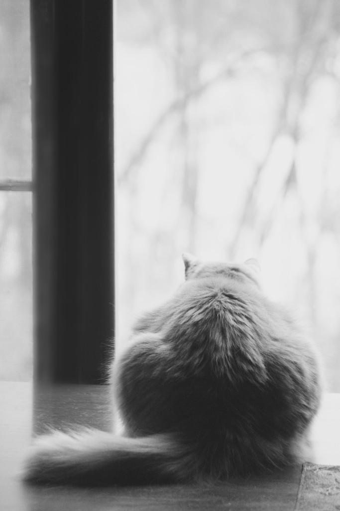 Harry in the Window by mzzhope