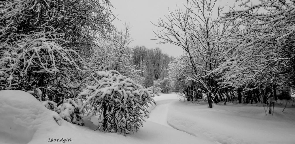 Snowy Backyard   by radiogirl