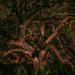 Kraken tree