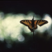 butterfly on horsetail