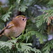 GOLDCREST GALLERY -ONE by markp