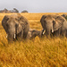 Serengeti Elephants by leonbuys83