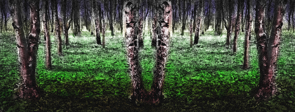 Enchanted Forest by lupus