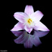 Reflected beauty by flyrobin