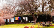 7th Feb 2016 - 2016 02 07 - Washing on the line