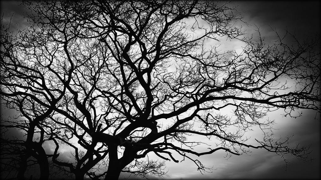 Tree by iowsara