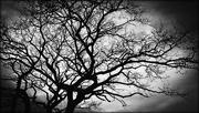 8th Feb 2016 - Tree