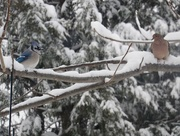 8th Feb 2016 - So Jay, Did You Hear We're Getting More Snow For Monday?