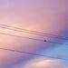 092 - Bird on a Wire