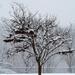 Tree 2 in February