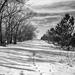 snowy trail by aecasey