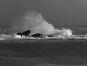 9th Feb 2016 - Thunderous Waves