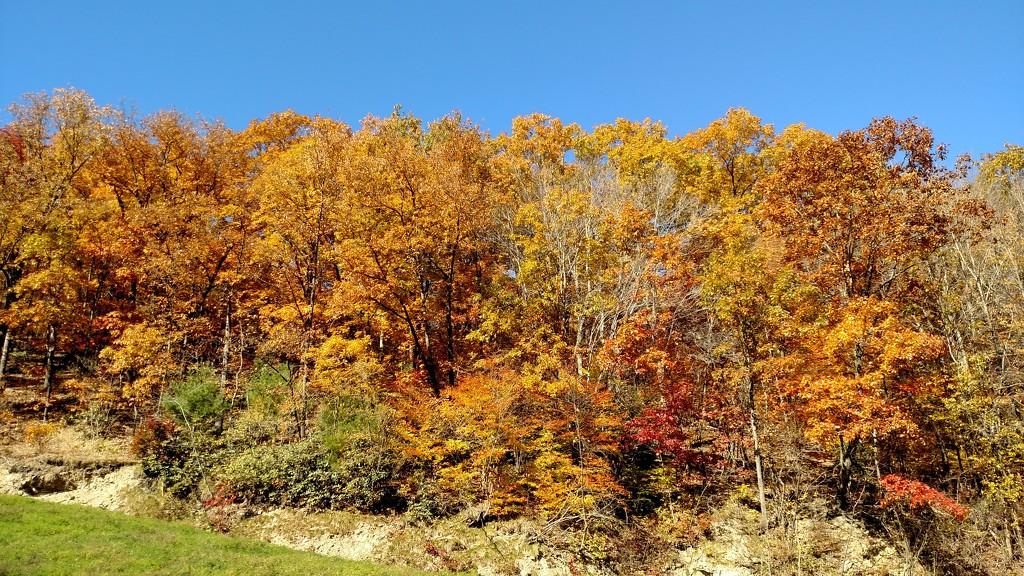 Fall Foliage by steelcityfox