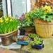 Autumn & Spring Pots..
