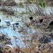 Lake Apopka Wildlife Preserve