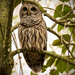 I thought owls slept in the daytime! by rickster549