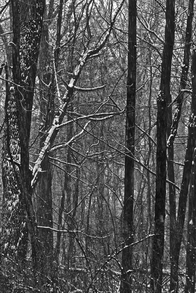 Black and White Wood by mzzhope
