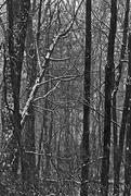 16th Feb 2016 - Black and White Wood